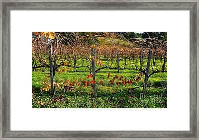 Vineyard 14 Framed Print by Xueling Zou