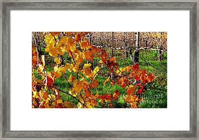 Vineyard 17 Framed Print by Xueling Zou