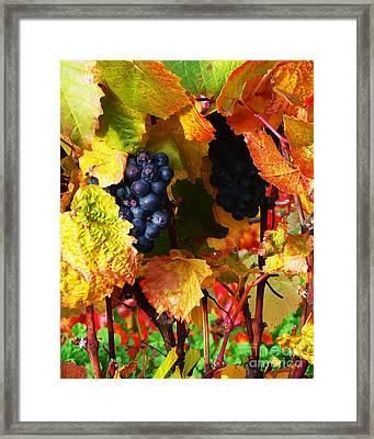 Vineyard 18 Framed Print by Xueling Zou