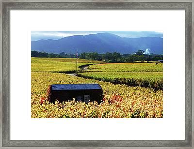 Vineyard 25 Framed Print by Xueling Zou
