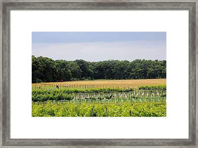 Vineyard And Pasture Framed Print by Brian Manfra
