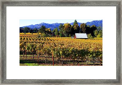Vineyard 4 Framed Print by Xueling Zou