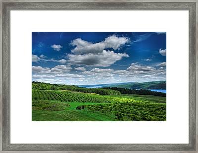 Vineyard And Lake Framed Print by Steven Ainsworth