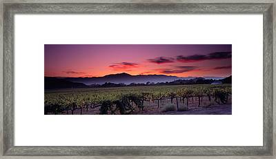 Vineyard At Sunset, Napa Valley Framed Print by Panoramic Images