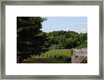 Vineyard Framed Print by Brian Manfra