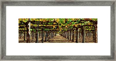 Vineyard Ca Framed Print by Panoramic Images