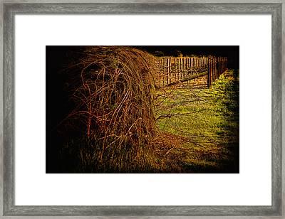 Vineyard Consumes Framed Print by John Monteath