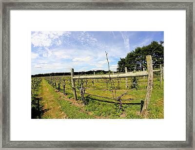 Vineyard Fence Framed Print by Brian Manfra