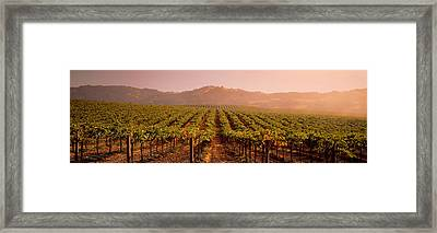 Vineyard Geyserville Ca Usa Framed Print by Panoramic Images