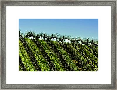 Vineyard In Autumn Framed Print by Fernando Lopez Lago