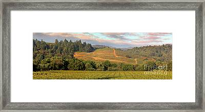 Vineyard In Dry Creek Valley, Sonoma County, California Framed Print by Wernher Krutein