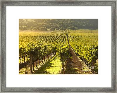 Vineyard In Napa Valley Framed Print by Diane Diederich