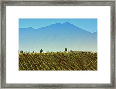 Vineyard In Tapihue Framed Print by Fernando Lopez Lago