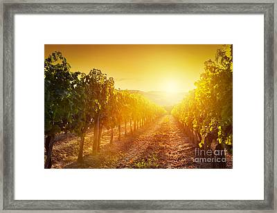 Vineyard Landscape In Tuscany Framed Print by Michal Bednarek