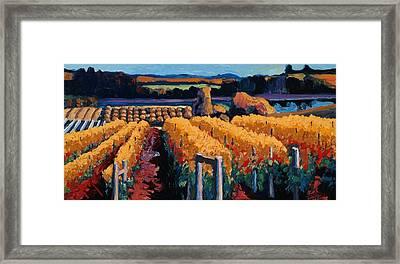 Vineyard Light Framed Print by Christopher Mize