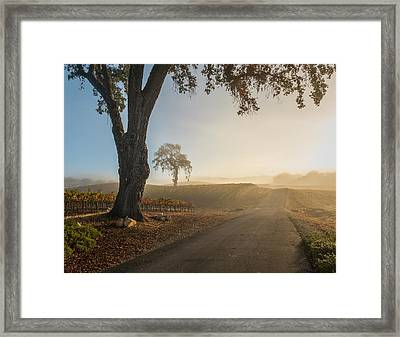 Vineyard Road Framed Print by Joseph Smith