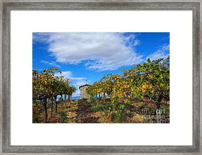 Vineyard Temple Framed Print by Mike Dawson