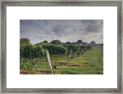 Vineyard With  Barn Framed Print by Steve Gravano
