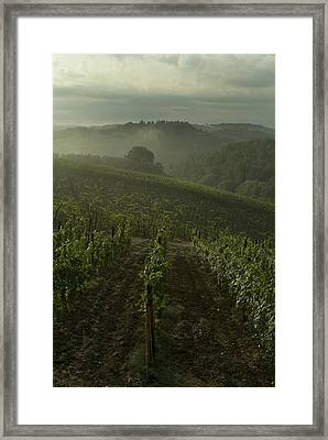 Vineyards Along The Chianti Hillside Framed Print by Todd Gipstein