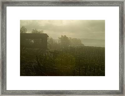 Vineyards Beside A Villa In The Fog Framed Print by Todd Gipstein