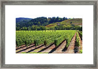 Vineyards In Sonoma County Framed Print by Charlene Mitchell