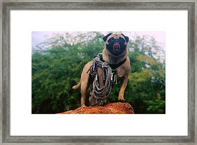 Vinny Is My Name And Pet Rescue Is My Game Framed Print by Allen Kimble jr