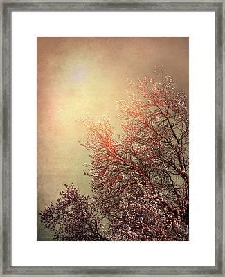 Vintage Cherry Blossom Framed Print by Wim Lanclus