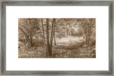 Vintage Deception Bay Woodland Framed Print by Jorgo Photography - Wall Art Gallery