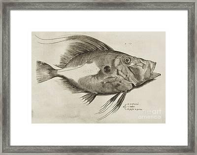 Vintage Fish Print Framed Print by Antonio Lafreri