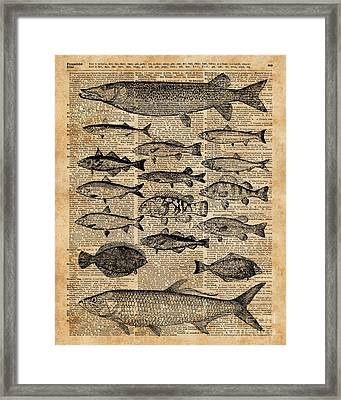 Vintage Illustration Of Fishes Over Old Book Page Dictionary Art Collage Framed Print by Jacob Kuch
