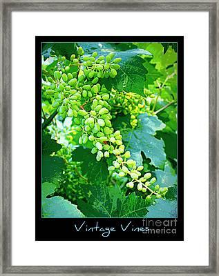 Vintage Vines  Framed Print by Carol Groenen