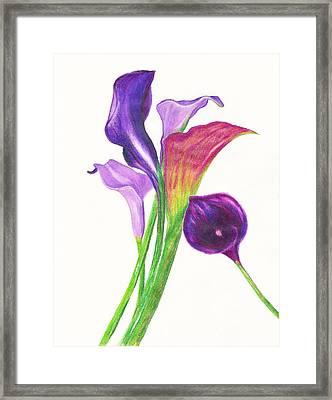 Violet Calla Lillies Framed Print by Candalis Escudero