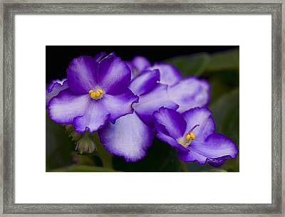 Violet Dreams Framed Print by William Jobes