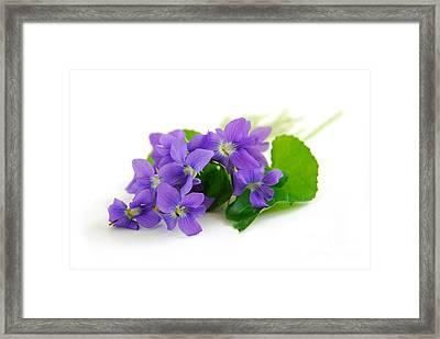 Violets On White Background Framed Print by Elena Elisseeva