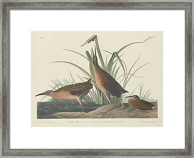 Virginia Rail Framed Print by John James Audubon