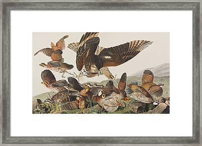 Virginian Partridge Framed Print by John James Audubon