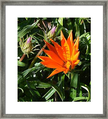 Visible Radiation Framed Print by Chalet Roome-Rigdon