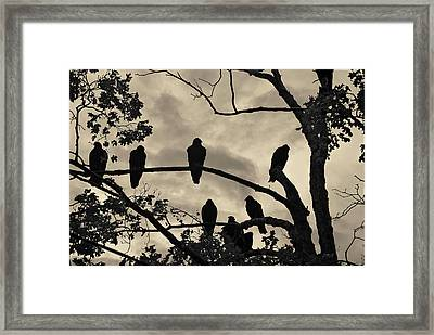 Vultures And Cloudy Sky Framed Print by David Gordon
