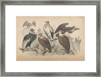 Vultures Framed Print by Oliver Goldsmith