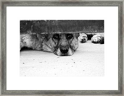 Waiting And Watching Framed Print by Solomon Aseoche