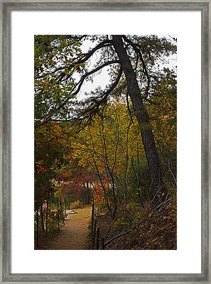 Walden Pond Path Into The Forest 2 Framed Print by Toby McGuire
