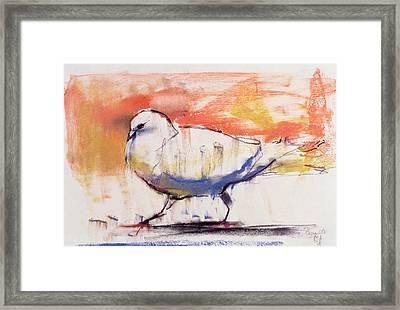 Walking Dove Framed Print by Mark Adlington