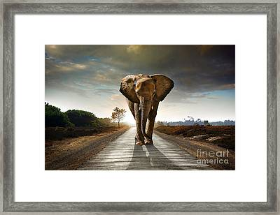 Walking Elephant Framed Print by Carlos Caetano