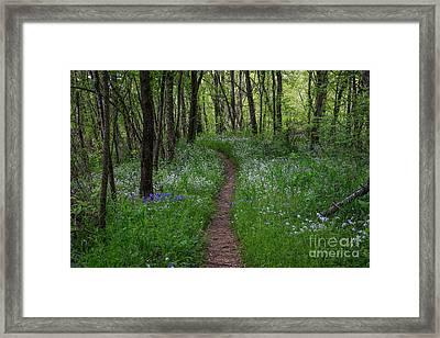 Walking Meditation Framed Print by Lynn Sprowl