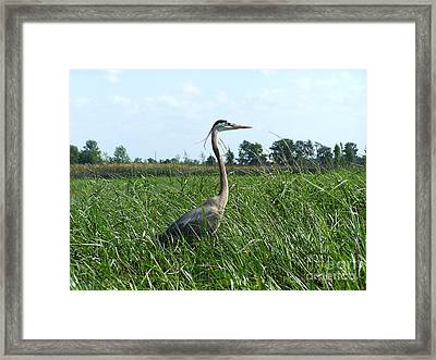 Walking Tall Framed Print by Jack Norton