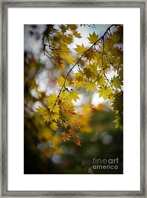 Walks In The Autumn Garden Framed Print by Mike Reid