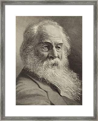 Walt Whitman Framed Print by American School