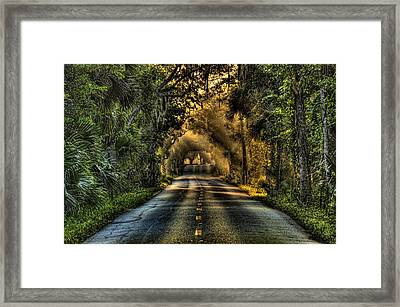 Walter Boardman Lane Framed Print by Andrew Armstrong  -  Mad Lab Images