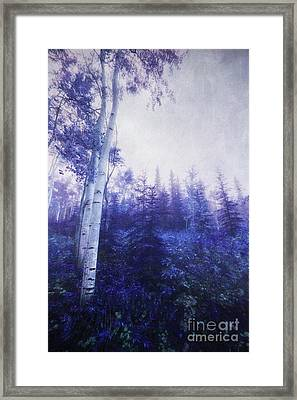 Wander Through The Foggy Forest Framed Print by Priska Wettstein