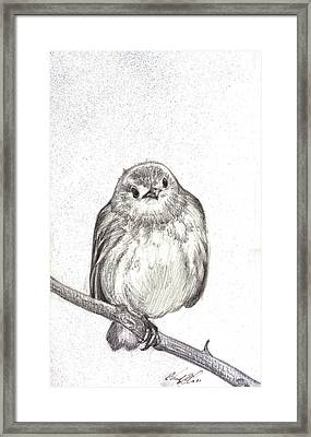 Warbler Framed Print by Chad Glass
